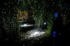 Freckled Bamboo (ToDoe) Tags: night licht frankfurt bamboo palmengarten freckled bambus ligths lightinstallation lichterzauber getpfelt