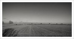 Herbstlicht (7) (Manfred Hofmann) Tags: flickr feld orte brd lichtundschatten projekte themen kurpfalz ffentlich ipernity meckenheimpfalz