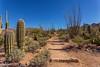 IMG_6218-Bearbeitet (dominikborsch) Tags: tucson arizona usa saguaros saguaronationalpark nature nationpark landscape landschaft desert wüste kaktus cactus