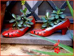 Tanta fortuna.. (antonè) Tags: scarpe scarperosse crassulaovata finestra grata santulussurgiu sardegna natale capodanno fortuna