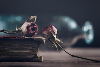 Old book and dried roses