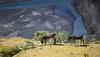 Donkeys of Damkhar, India 2016 (reurinkjan) Tags: india 2016 ©janreurink himachalpradesh spiti kinaur ladakh kargil jammuandkashmir donkey spitivalley dhankargompa dankhar drangkhar dhangkargompa brangmkhar grangmkhar himalayamountains himalayamtrange himalayas landscapepicture landscape landscapescenery mountainlandscape