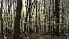 Frost (ivlys) Tags: odenwald frankenhausen raureif hoarfrost wald forest kalt cold landschaft landscape bäume trees nature ivlys