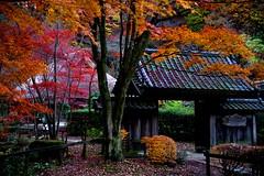 Deep Autumn (tez-guitar) Tags: autumn autum 紅葉 autumn leaves tree trees wood forest garden house gate architect machida 町田 machida pentax pentaxart