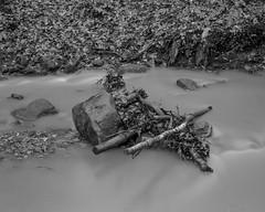 Tree debris and rocks in the burn (Stanley Burn Woods) (Jonathan Carr) Tags: water rocks burn landscape rural northeast toyo45a 4x5 5x4 largeformat bw black white monochrome tree debris