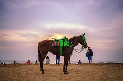 My wait is not over !! (Ivon Murugesan) Tags: animal animals beach horse horseride india letsexplore light mamallapuram morning nature ocean outdoor people places river sea seashore sunlight sunrise sunshine travel water waterscapes mahabalipuram ivon ivonmurugesan tamilnadu sun flickrtravelaward