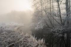 Touch (jellyfire) Tags: forest hoxne landscape landscapephotography sonnartfe55mmf18za sony sonya7r winter atmospheric cold fog frozen hoarfrost leeacaster mist trees woods wwwleeacastercom zeiss