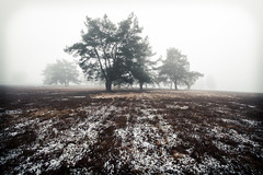 Frozen Ground.. (Mini-UE || Mini-Photography) Tags: nature na nicolaes michel natuur ngc beauty beautiful belgium belgie explore fog myst mysterious mystic lost lonely foggy awesome art artist love light tre tree composition creepy compo cold dark