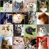 =^.^= Angels in heaven =^.^= (Silvia Inacio) Tags: tribute cats cat gato gatos mosaic fdsflickrtoys rainbowbridge catmoments cc100