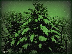 The Look of Winter (Lynn English) Tags: tree ps countryclubsnow 1216ribbet