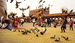 Las palomas de la mezquita (Nebelkuss) Tags: india delhi jamamasjid mezquita mosquee palomas doves children niños elzoohumano thehumanzoo fujixpro1 fujinonxf18f2 asia momentos moment ladrondemomentos instantes instant instantsthieve