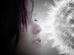 The Contact (Deter Stoibl) Tags: jinnyjoe seedhead blowball mystisch mystic girl mädchen pusteblume touch berührung kontakt contact löwenzahn dandelion