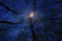 Miedo a la oscuridad (Mimadeo) Tags: forest night moon horror dark moonlight halloween tree spooky mystery landscape blue fear sky silhouette scary evil haunted fantasy gothic darkness shadow mysterious nightmare dramatic midnight light nature