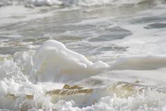 DSC_0161 (sarahk5446) Tags: gulfofmexico gulfcoast water waves wildlife gulfshores ocean orangebeach outside nautical nikon natural nature sand summer spring sea sky swim surf sun seashore alabama adventure america floridastateparks florida