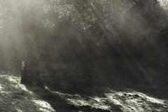 Luz del alma, luz divina (Julián Iglesias) Tags: rayosdesol mañana campo niebla sol arbol encina sunbeams fog tree country