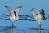 Paynes Prairie State Park La Chua Trail Sandhill Cranes 01-10-2017 (Jerry's Wild Life) Tags: alachua alachuacounty crane cranes florida gainesville paynesprairie paynesprairiestatepark sandhill sandhillcrane sandhillcranes sandhills