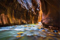 The Narrows (Rattleep) Tags: canyon osterreise2015 thenarrows usa utah virginriver zionnationalpark sdphotographie2015