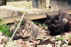 Today's Cat@2017-04-01 (masatsu) Tags: cat thebiggestgroupwithonlycats catspotting pentax mx1
