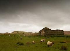 Weather for sheep or ducks (Ray Byrne) Tags: uk england rain clouds rural canon wow landscape 350d countryside sheep unitedkingdom britain dunes country north ruin northumberland alnmouth canon350d gb northern northeast landscapephotography raybyrne alnmouthdunes byrneout