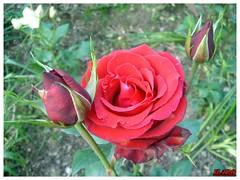 2006_0519_165527 (halo_lin) Tags: wulingfarm
