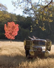 Tree Red, Truck Dead (michelepost) Tags: themered abigfave micheleireys indieimages