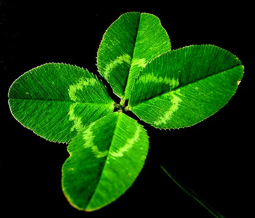 how to get rid of red leaf clover