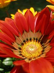 Flower's Heart