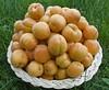 Apricots (lo75) Tags: apricot apricots lo75