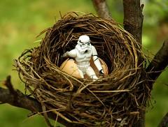 Storm Trooper Nest (ricko) Tags: tree deleteme6 topf25 fun actionfigure starwars 500v20f savedbythedeletemegroup nest bokeh topv1111 birth egg saveme10 stormtrooper phun hatched rmj flickrsbest bokehphotooftheday maydaforcebeupyours twtmeblogged saveme102 bokehsonicejuly bokehsonicejuly28 specobject toytagger 123f50 top20actionfigures
