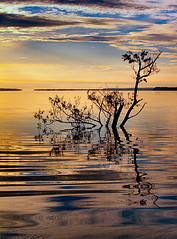 qP1011891 (Sam's Exotic Travels) Tags: brazil tree water niger sunrise river amazon rainforest sam sams ariau travelphotos jungletower samsays samsexotictravelphotos exotictravelphotos samsayscom