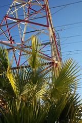 Palm Tree and Wires