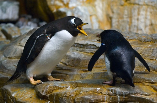 Arguing Penguins by nouQraz.