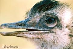 Avestruz (fabio teixeira) Tags: brazil brasil fabio teixeira fabioteixeira