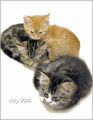 Three kittens posed for a sculpture. (Pixel Packing Mama) Tags: cute tag3 taggedout catwomen nice 6ws lovely1 adorable tuxedocats letsplaytagyoureit loveit mycats tuxedokitties catsandkittensset catscatscats ilovemycat furryfriday nuggets catsdogs cutecat allanimals funnyhaha cutekittens animalfeelings catskittensset catlovers heartlandhumanesociety v1000 petparade flickrcat notmycat beautifulcats happycats favorites5 catpix pixelpackingmama meowscollector tabbycatspool catssmalltobig taggedoutthegraduatesofletsplaytag dorothydelinaporter laughoutloud canonpowershota510a520 worldsfavorite notmypet taggedoutproudofitset ourcatcompanions melfanclub somebodyelsescat catsworld welovelatte crazyaboutcats cc1000 tobysgroupies blackcatmillie catcentury ourbelovedcats catsanddogsfromaroundtheworld catsaremyfriends everbodywantstobeacat mywinners montanathecat~fanclubpool favoritedpixset cat1000 mostinterestingaccordingtoflickralgorithmset ceruleanthecat~fanclubpool thetabbycatgrouppool cats760viewspool allcatsallowedpool uploadedsecondhalfof2006set update4sure catsaremyfriendsfriendofthemonthvoteseptemberpool update4sureset oversixmillionaggregateviews