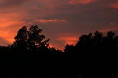 Sunset this evening... (Flutterbye_856) Tags: blue trees light sunset orange nature beauty ilovenature dusk firelike specnature abigfave