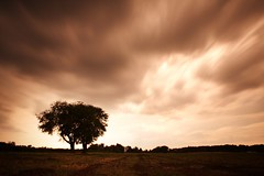 July - the heat (Mace2000) Tags: longexposure trees nature clouds germany landscape deutschland 350d 500v20f natur heat landschaft cloudjunkie langzeitbelichtung ndfilter 4aces nothinglastsforever mace2000 photoamonth nomorewheat img4512 noduotone wildcherrytrees countryscenery