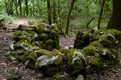 ericeira junto al Eume (briveira) Tags: construccin erizo castao ericeira castaa bloque piedra briveiracom