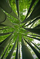 Tangled Bamboo (Pat Rioux) Tags: china forest wideangle bamboo chengdu sichuan sigma1020mm dufucaotang
