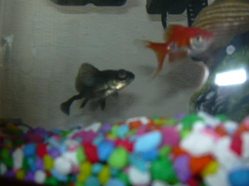 Bertha & Ramone