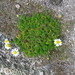 Mayweed, Bryher