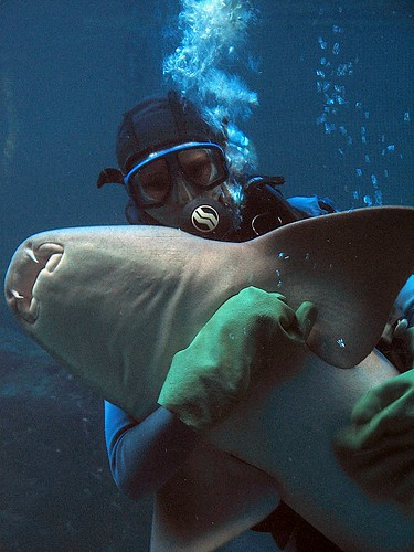 Woman Hugs a Nurse Shark