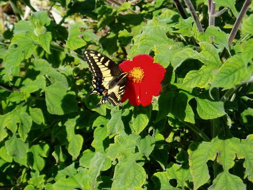Butterfly in Malibu