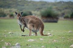 Kangaroo Island © Gretchen Cooney