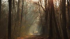 Autumn / Fal / Herfst / Automne (tribsa2) Tags: nederlandvandaag marculescueugendreamsoflightportal amsterdam autumn automne arbre amsterdamschebos bos boom bomen forest foret tree trees