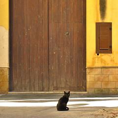 le chat noir (archifra -francesco de vincenzi-) Tags: door urban italy cat blackcat square puerta chat colore giallo gato porte gatto sicilia carr portone gattonero mazaradelvallo archifraisernia francescodevincenzi kasbahdimazaradelvallo
