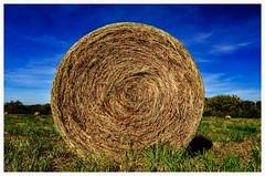 One more haystack (vainapur) Tags: blue fall grass circle farm circles bluesky farmland haystacks farms hay haybales deepblue
