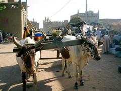 DJENNE,MALI (revelinyourtime) Tags: people animals architecture market outdoor mosque vehicle mali djenne