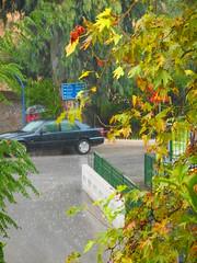 (Psinthos.Net) Tags: road trees storm water car rain drops afternoon cloudy eucalypt raindrops raining railings treebranches acacia wetroad planetree cloudiness    vrisi        rainingafternoon                   vrisiarea    vrisipsinthos