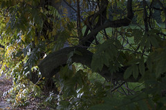 Floriade_251015_27 (Bellcaunion) Tags: park autumn fall nature zoetermeer rokkeveen florapark