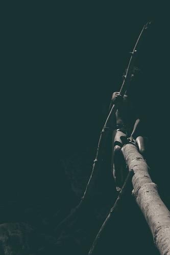 Wood Lines / lignes de bois